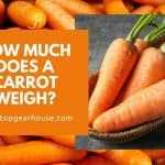How Much Does A Carrot Weigh